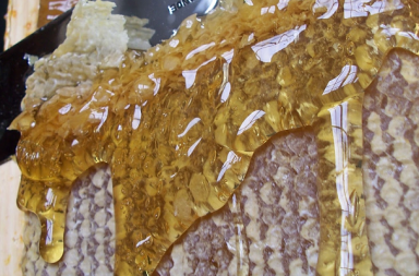 Miel recolte