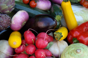 culture legumiere