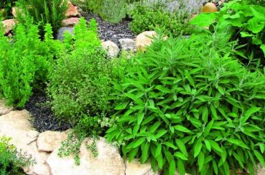 jardin medicinal