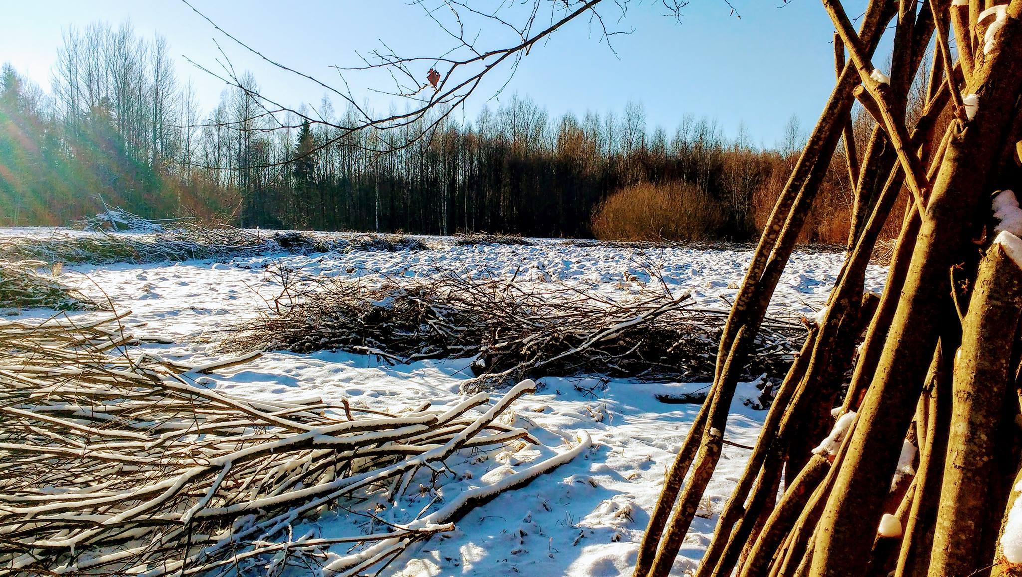 une vie dans les bois leur cabane en estonie vivre en autonomie. Black Bedroom Furniture Sets. Home Design Ideas